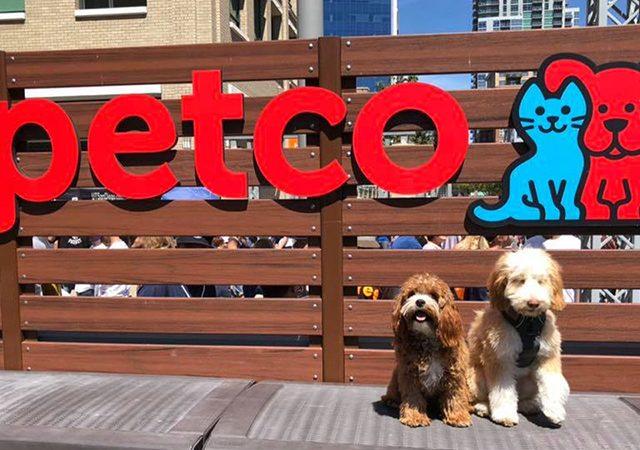 Tiendas de mascotas en Miami y Orlando