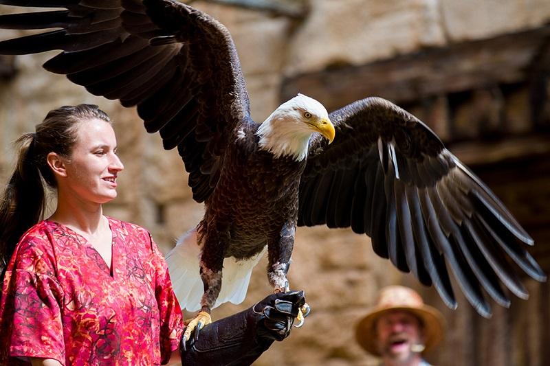 Flights of Wonder no Animal Kingdom en Orlando