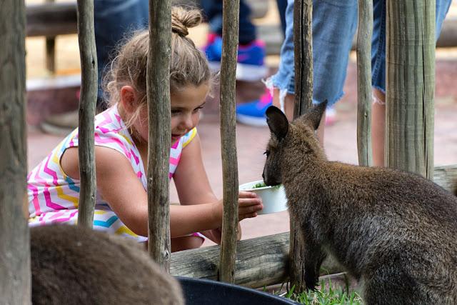 Interacción con animales en Busch Gardens