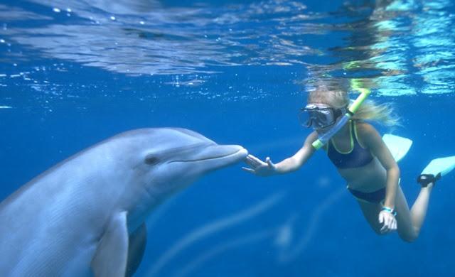 El Dolphin Lagoon
