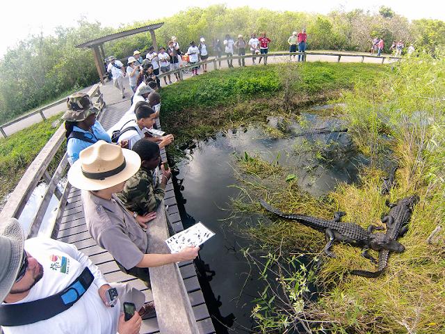 Visitantes en Everglades National Park en Flórida