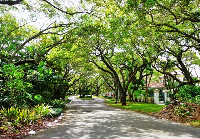 Consejos de Coconut Grove